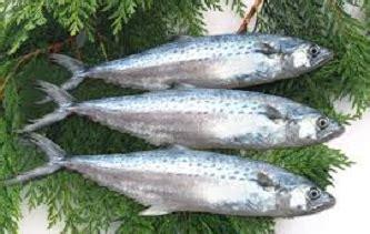 memasak ikan tenggiri rumahan  enak  bumbu bali