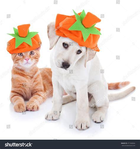 imagenes otoño halloween autumn pet puppy dog kitten cat imagen de archivo stock
