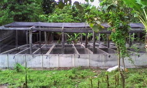 Budidaya Cacing Yogyakarta peternak cacing di sragen jawa tengah sukses setelah