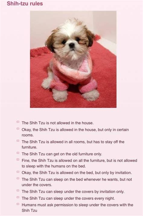 how to potty my shih tzu 104 best images about shih tzu quotes on