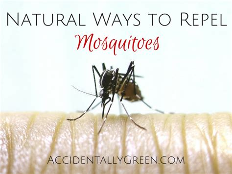 natural ways to repel mosquitoes accidentally green