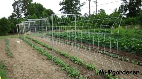 How To Grow Green Beans On A Trellis pole bean trellis how to set it up
