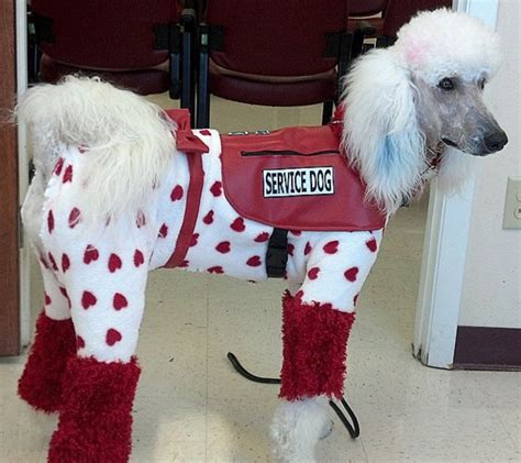 i want to service dogs enough with the service dogs stuart s website