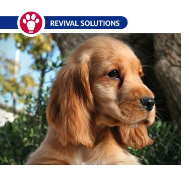 seborrhea in dogs seborrhea in dogs causes symptoms and treatment