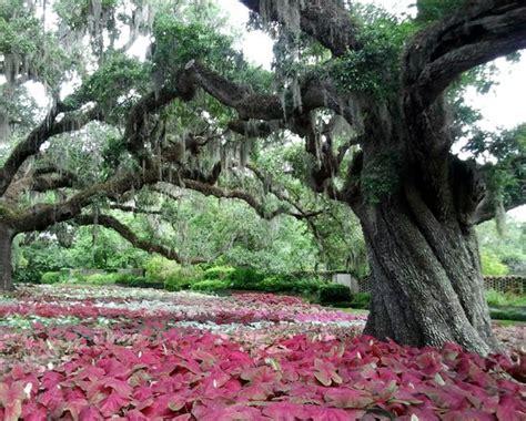 Brook Green Garden by Brookgreen Gardens Murrells Inlet All You Need To