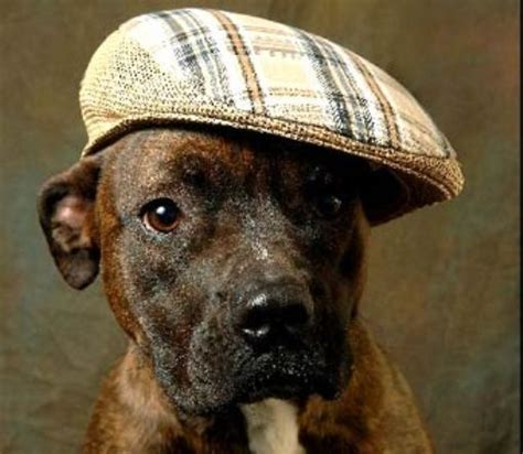 puppies with hats pictures 187 dogs in stylish hats