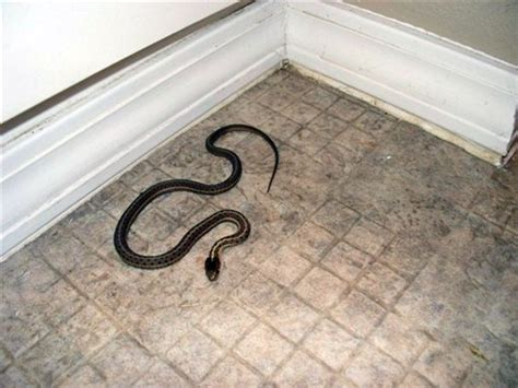 snake infested house idaho couple s dream home was infested with snakes news thetandd com