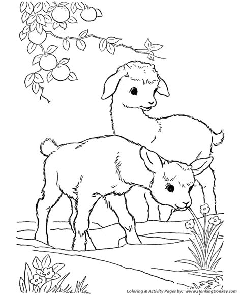 farm animal coloring pages printable kid goats coloring
