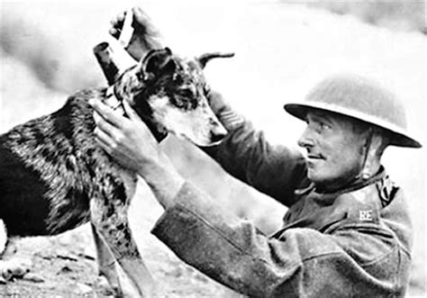 and the dogs were silent a s diary of pit bulls and dogfighting books world war i facts 48 facts about world war i factslides
