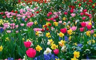 Flower Spring by Spring Flowers Backgrounds Desktop Wallpaper Cave