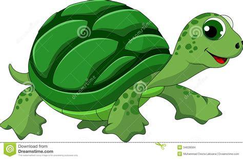 turtle cartoon stock images image