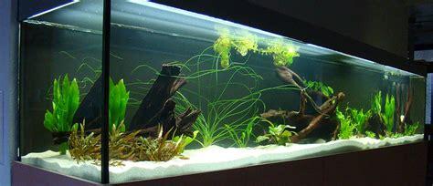 fish amp reps 174 aquarienbau und terrarienbau startseite