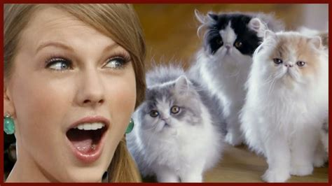 taylor swift cat video proof that taylor swift has a cat problem youtube