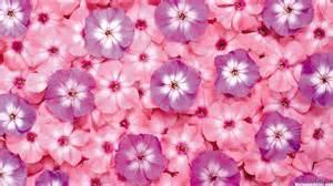 Hd pink and purple flower pattern wallpaper download free 139268
