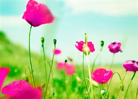 green wallpaper with pink flowers flowers images full screen hd best flowers and rose 2017