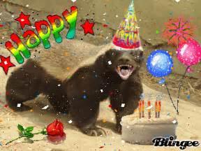 honey badger birthday picture 123183169 blingee com
