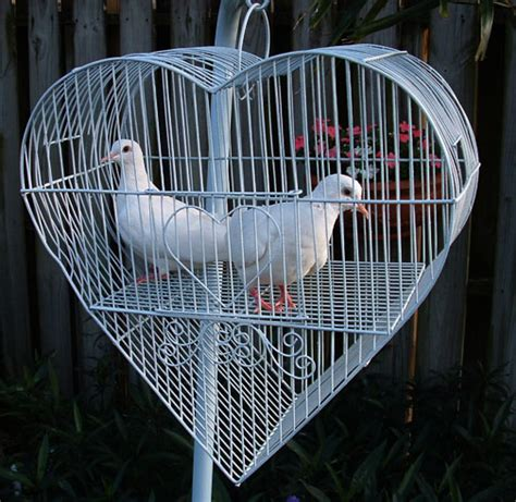 dove release fort lauderdale dove cage display