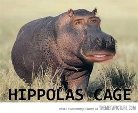 Cage Meme - nicolas cage photoshop meme