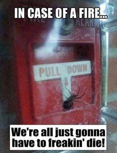 Spider Fire Alarm Meme - 1000 images about funny spider sayings on pinterest
