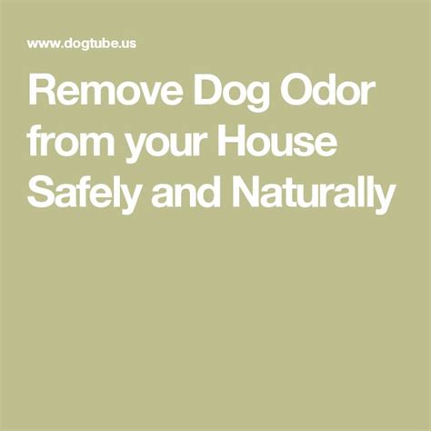remove dog smell from house 1000 ideas about remove dog odor on pinterest clean washer vinegar albion mall