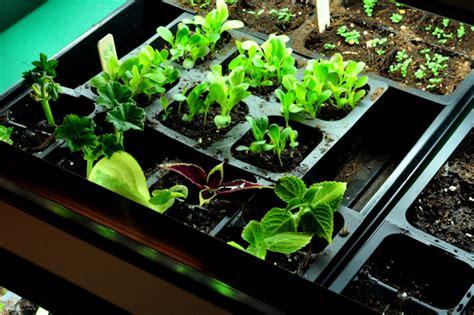 Cooks Garden Seeds by Start Some Garden Seeds A Tutorial Part 1