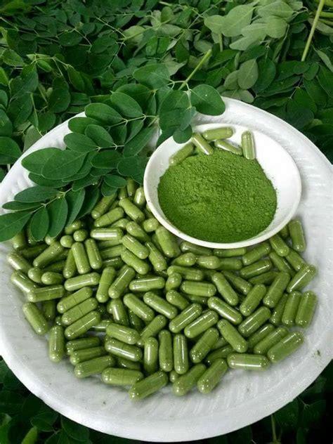 fresh homegrown homemade moringa leaf powder capsule