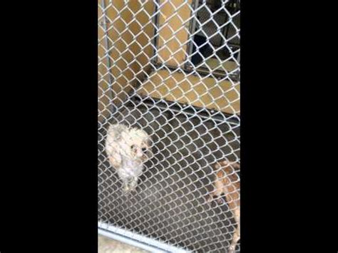 downey pound the shameful downey shelter in california 2015