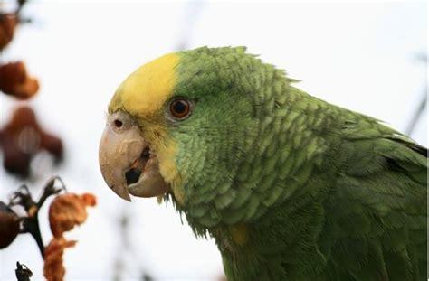 vogel garagen feuerbach 220 ber 110 vogelarten in stuttgart papageien sind die