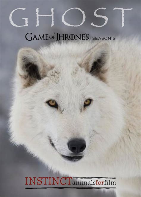 ghost actor game of thrones games of thrones casts jon snow s direwolf ghost the big