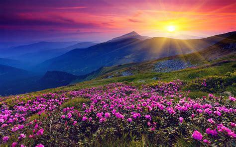 Landscape Pictures With Flowers Beautiful Flower Landscape 29011 1280x800 Px