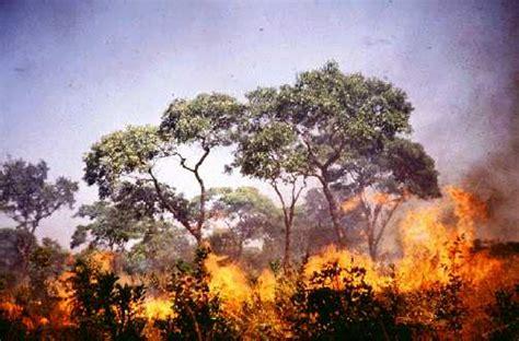 Khazanah Flora Dan Fauna Nusantara akibat kebakaran hutan produksi industri kertas terancam