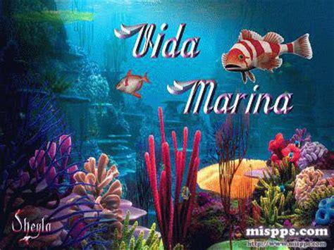 imagenes de la vida marina vida marina sheyla