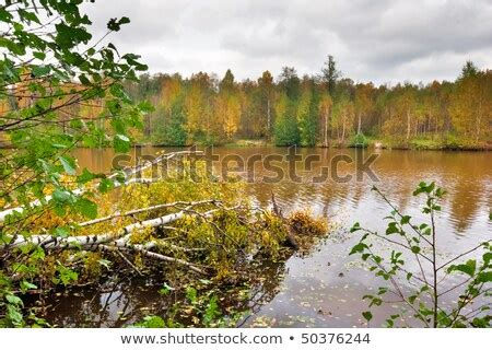autumn lake  gloomy cold weather stock photo  shutterstock