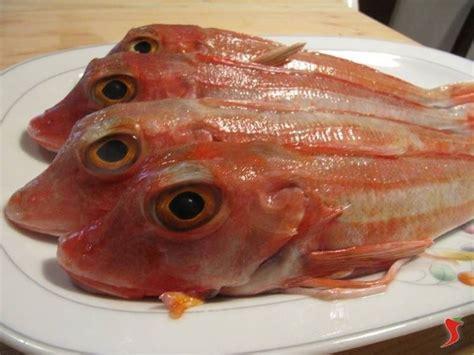 come si cucina la gallinella di mare come cucinare la gallinella di pesce galleria