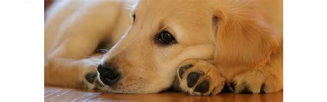 mascotas para un piso 191 mascotas en un piso de alquiler