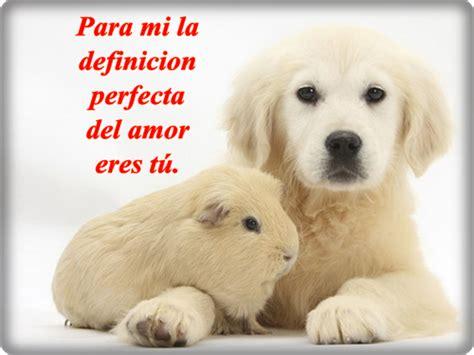 imagenes tiernas de amor con animales im 225 genes de amor con movimiento de corazones rosas y