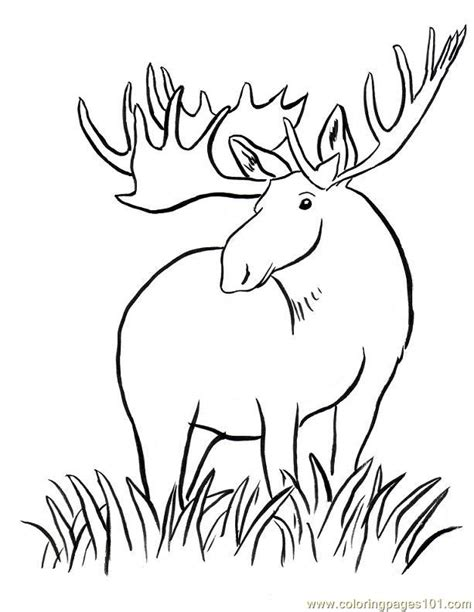 coloring book pages moose coloring pages moose big horn animals gt moose free