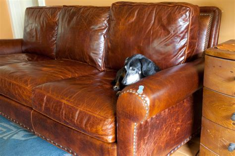 Leather Sofa And Dogs Real Leather Dog Sofas Luxury Beds Leather Sofas And Dogs
