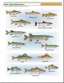 freshwater fish pics photos freshwater fish species