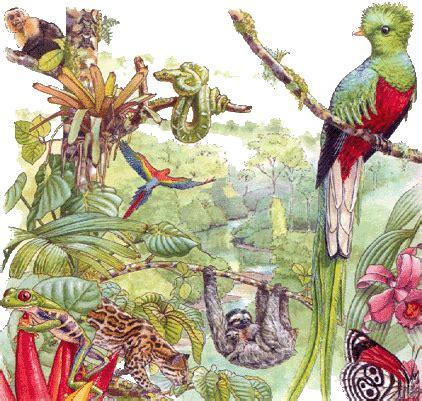 imagenes de animales y plantas de mexico los animales