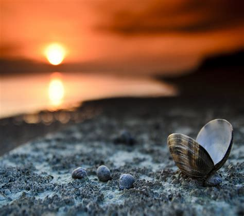 shell wallpaper wallpapers hd beach shell wallpaper gallery