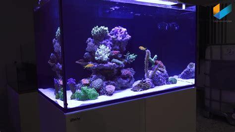 Pompa Hidram Aquarium sea reefer aquarium presentation by georg of sea
