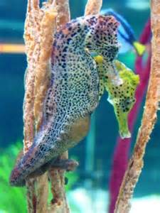 what color are seahorses the world s catalog of ideas