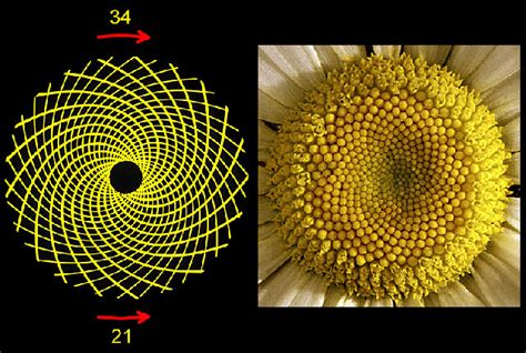 golden section in nature 15 uncanny exles of the golden ratio in nature