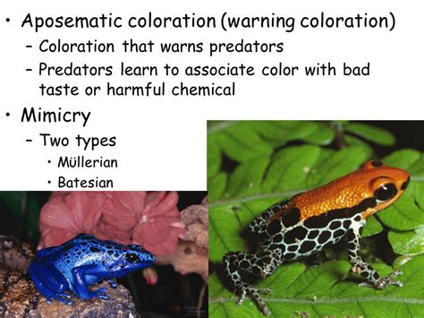 aposematic coloration concerned with community structure and population