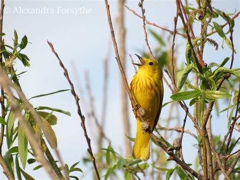 the inaugural indiana dunes birding festival midwest