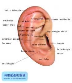 external diagram of ear anatomy of external ear anatomy of