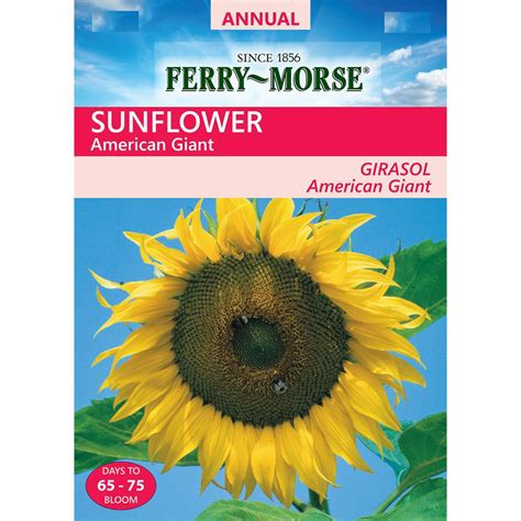 American Giant Gift Card - ferry morse sunflower american giant seed 1950 the home depot