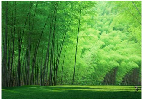 Pajangan Dinding Gadis Jepang Dari Bambuu macam macam rumput liar hias dilengkapi gambar rumput hd