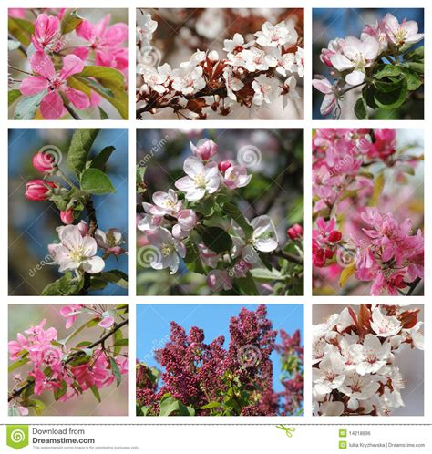 spring season nature collage with stock photo
